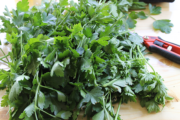 How To Freeze Fresh Herbs -allaboutthedetails-1